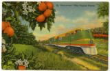 Citrus Postcards033a