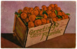 Citrus Postcards037a