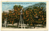 Citrus Postcards049a