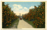 Citrus Postcards046a