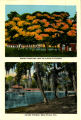 Citrus Postcards071.008b