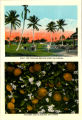 Citrus Postcards071.009a